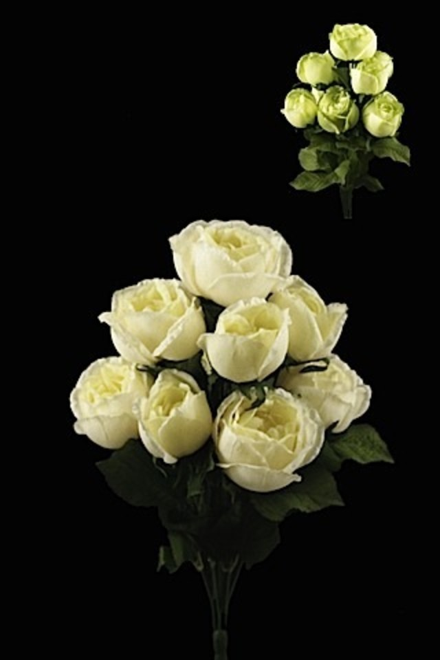 Damask Rose Bush X 9 Heads Holstens